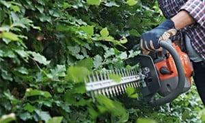 Taille haie thermique professionnel : coupe haie à essence