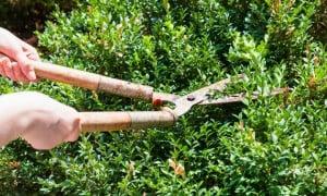 Sécateur de jardin professionnel haut de gamme : sans fil